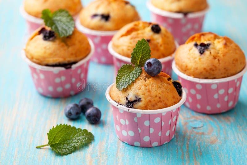 Muffin de blueberry em casos cor-de-rosa foto de stock
