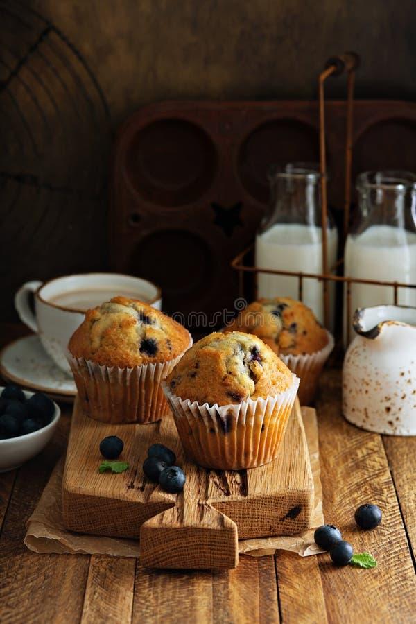 Muffin de blueberry recentemente cozidos em um ajuste rústico imagens de stock royalty free