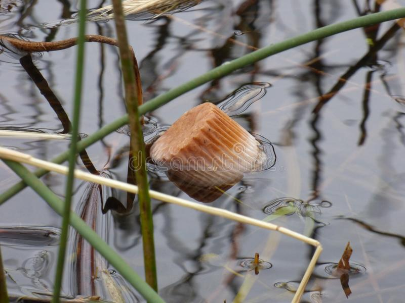 Muffin in pond stock images