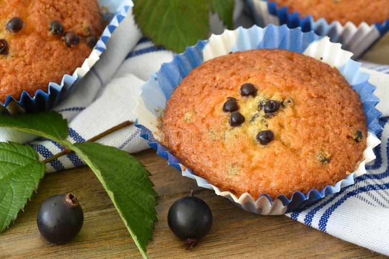 Muffincakes met blackcurrants royalty-vrije stock fotografie
