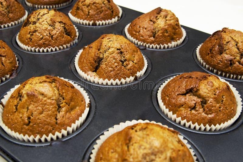 muffins μελοψωμάτων φλυτζανιών στοκ εικόνες