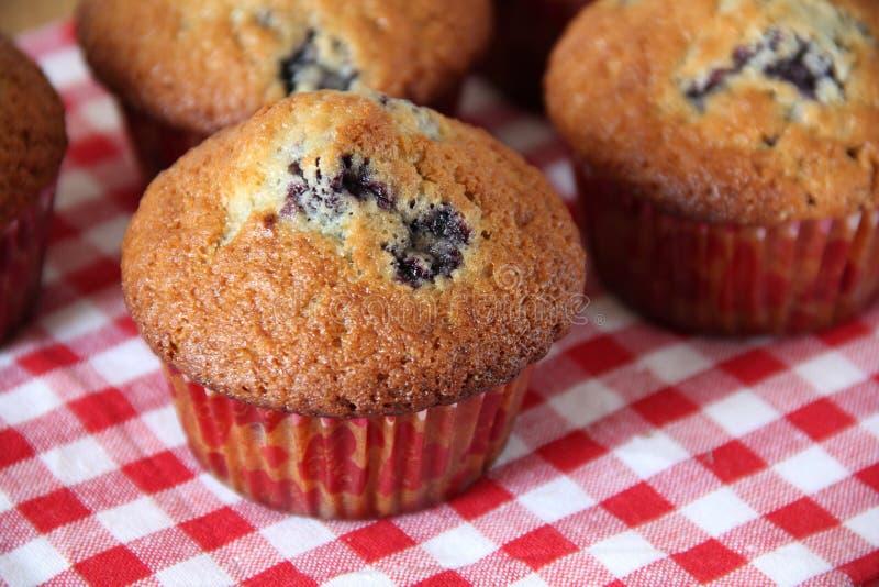 muffins μυρτίλλων στοκ φωτογραφία με δικαίωμα ελεύθερης χρήσης