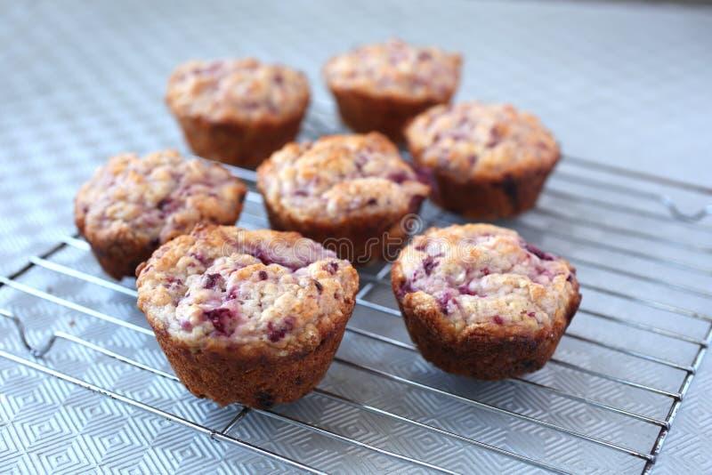 Muffins caseras frescas y calientes listas para comer imagenes de archivo