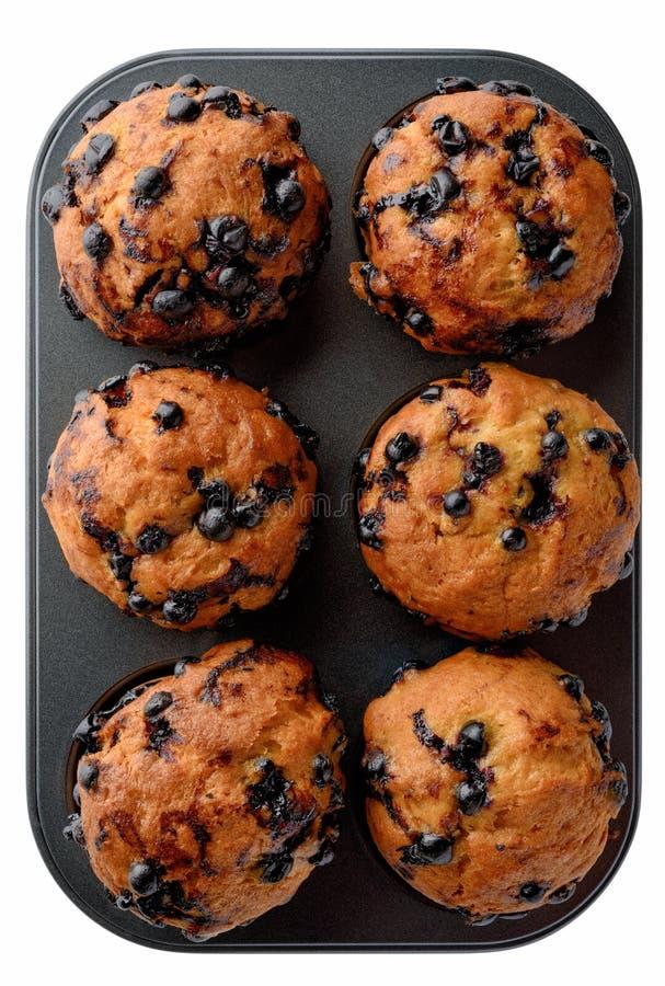 Muffins der Schwarzen Johannisbeere stockbild