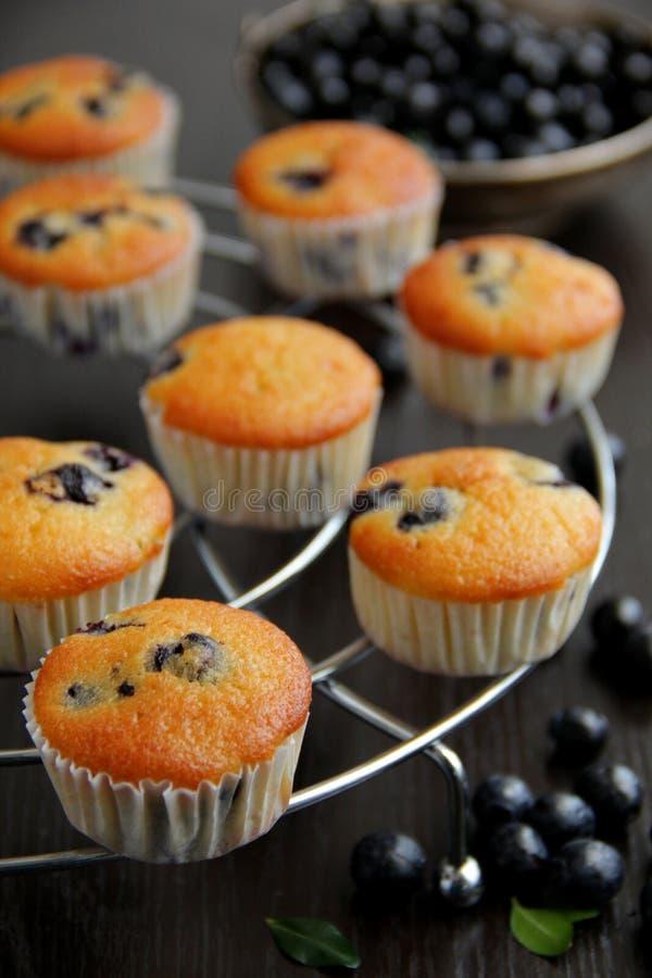 Muffins met bosbessen op de karnemelk. royalty-vrije stock foto's