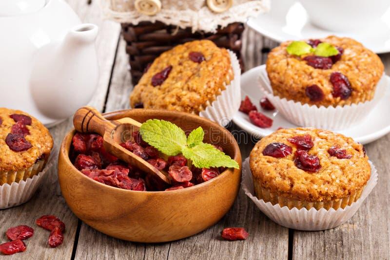 Muffins met droge bessen royalty-vrije stock foto