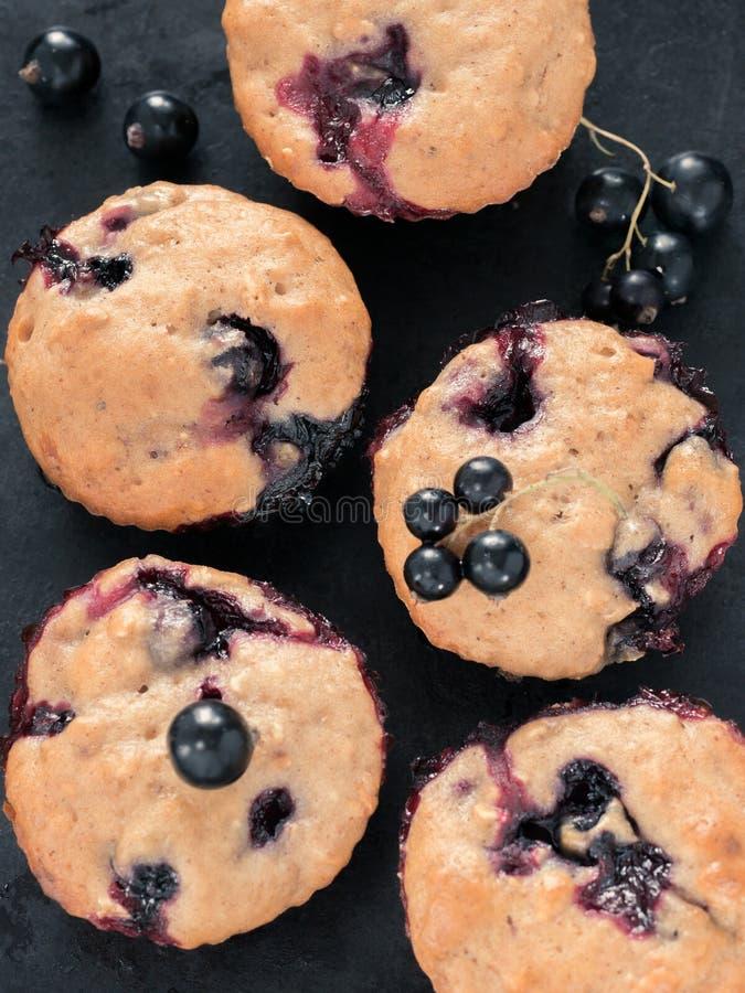Muffins mit Schwarzer Johannisbeere stockfoto