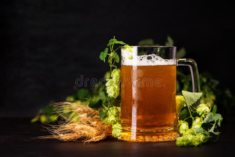 Mug of beer with wheat and hop cones on dark wooden background. October fest background.  stock photo