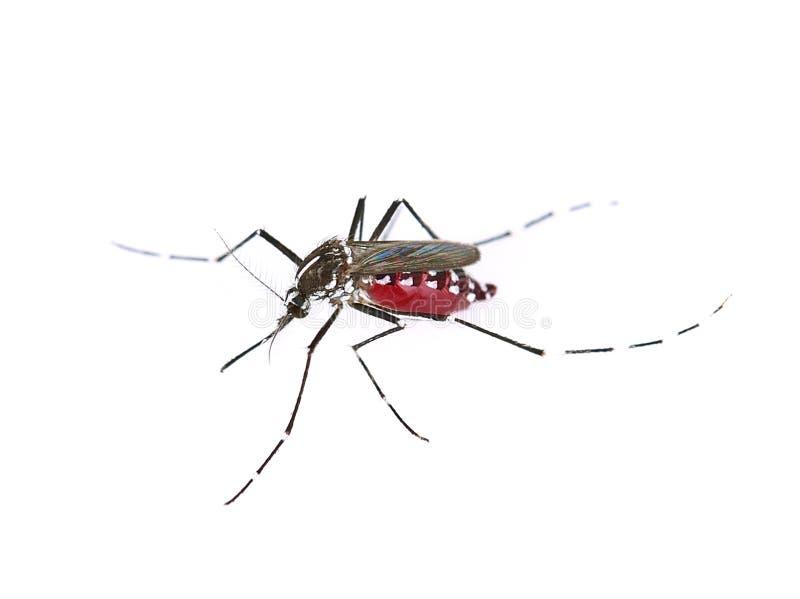 Mug op witte achtergrond stock afbeelding