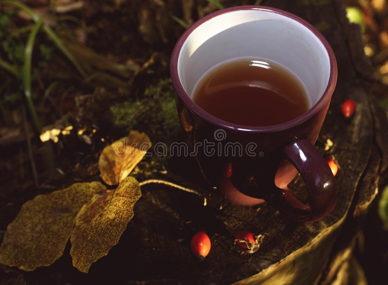 Mug with tea on the stump in the forest. Flat lay, autumn mood and fall concept royalty free stock photos