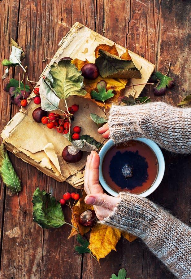 Mug of warm autumn tea. Female hand with a mug of warm autumn tea royalty free stock photos