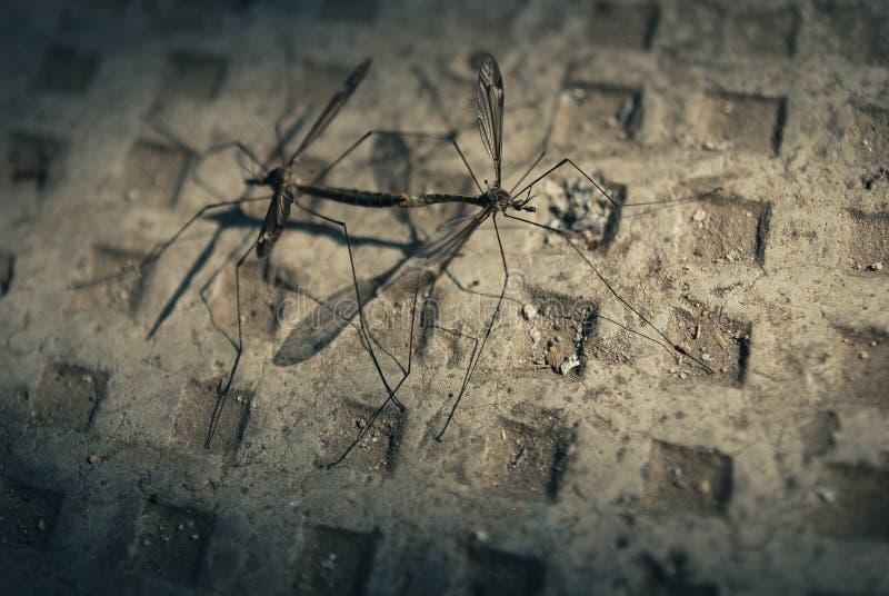 muggen royalty-vrije stock fotografie