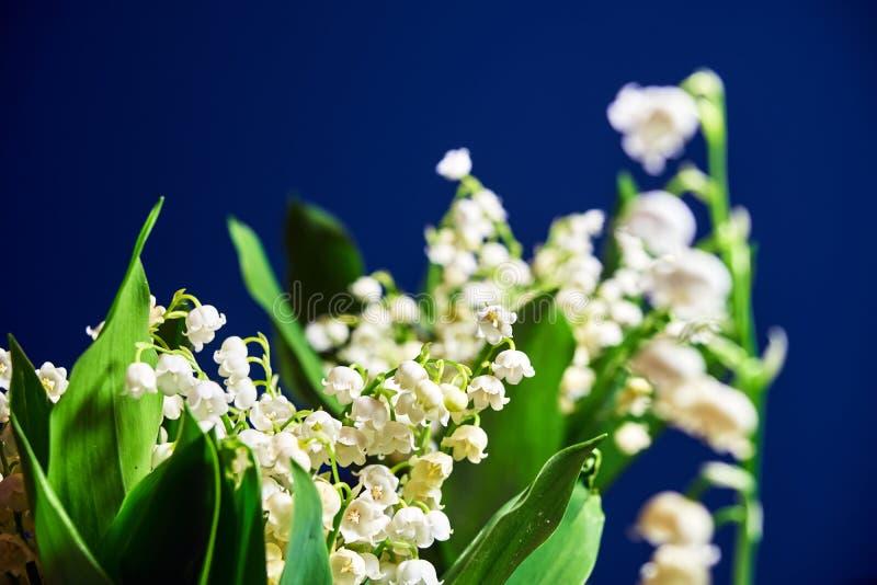Mughetto - piccoli fiori bianchi immagine stock