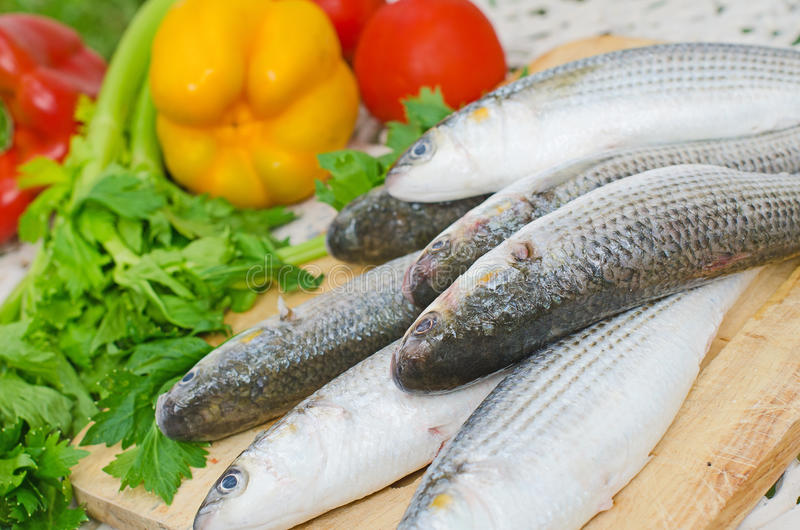 Download Mugil cephalusvissen stock afbeelding. Afbeelding bestaande uit cooking - 39118549