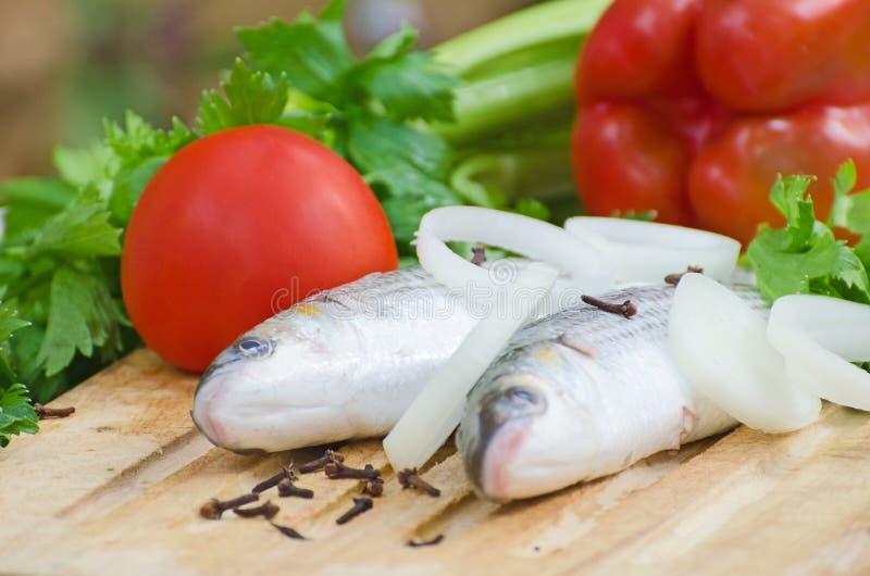 Download Mugil cephalusvissen stock afbeelding. Afbeelding bestaande uit groen - 39118585
