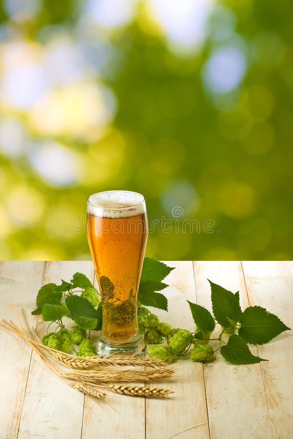 Mugs with beer and hop on wooden table royalty free stock images