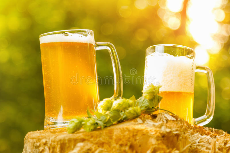 Mugs with beer on natural background. Mugs with beer hops octoberfest, picnic on natural stump background royalty free stock image