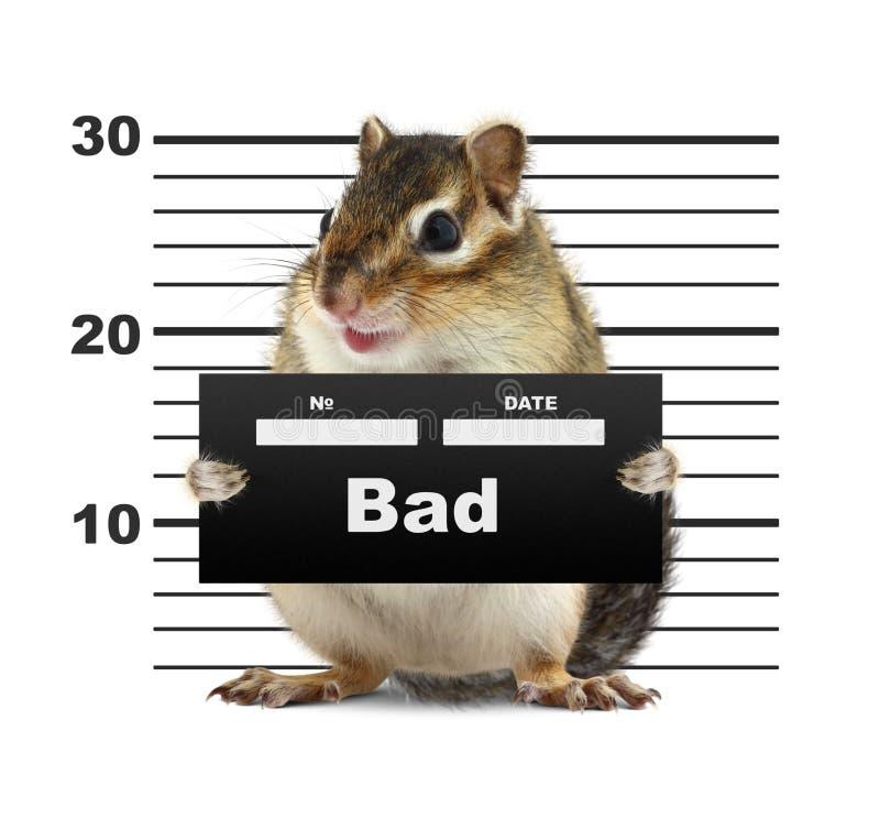 Mugshot background with rodent royalty free stock image