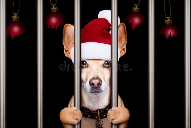 Christmas mugshot dog stock photography