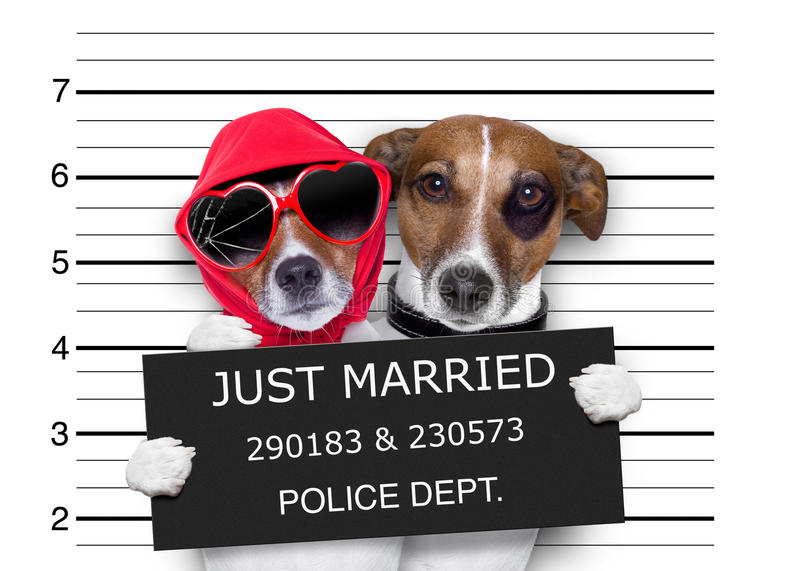 Mugshot just married dogs stock photos