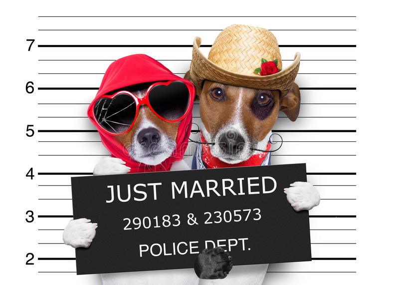 Mugshot just married dogs stock image
