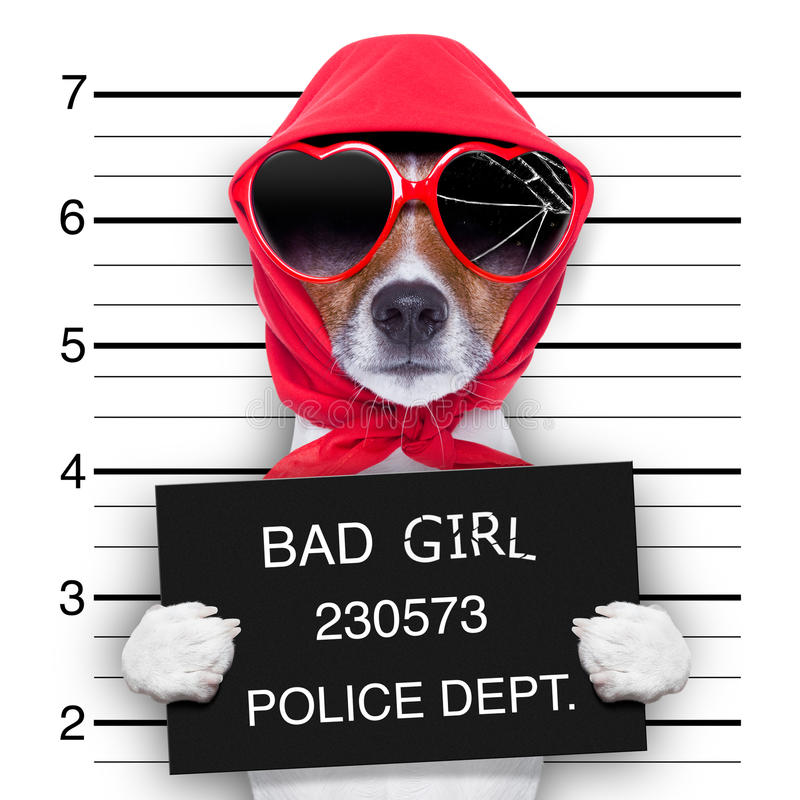 Mugshot lady dog stock image