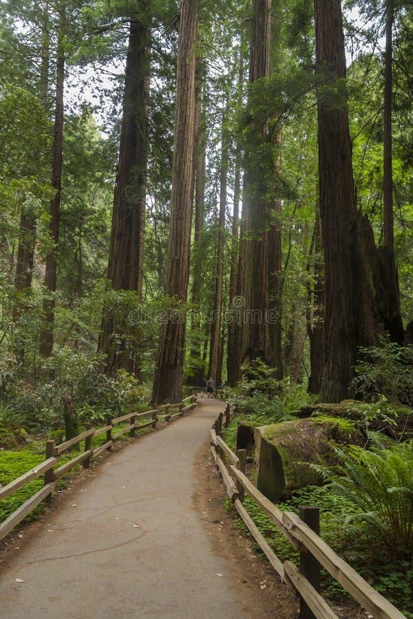 Muir森林国家历史文物美国 免版税库存图片