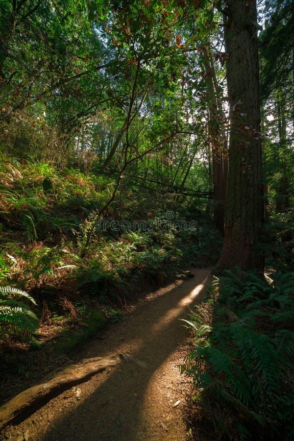 Muir森林国家历史文物 免版税库存图片