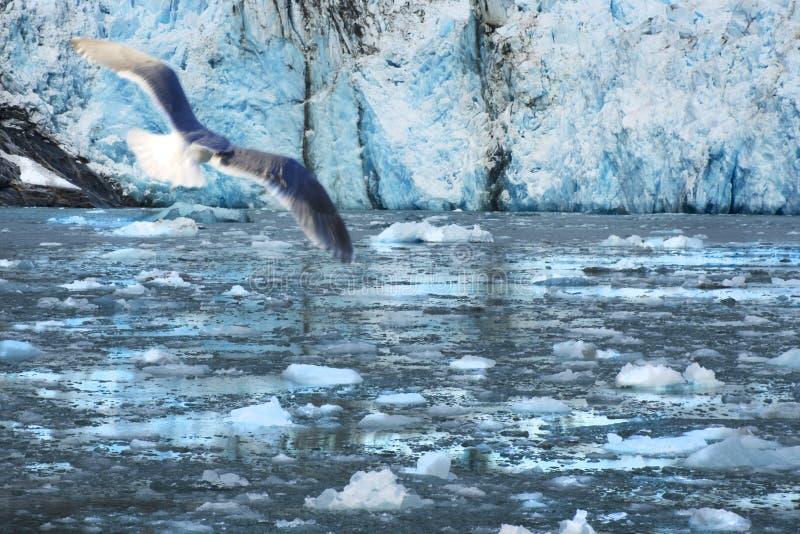 Muir Glacier, Alaska lizenzfreies stockfoto