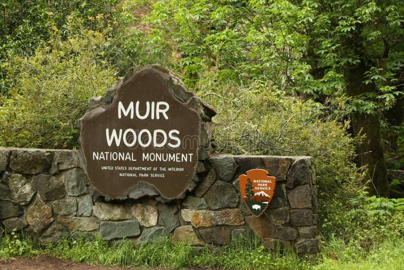 Muir Woods National-Monument lizenzfreies stockfoto