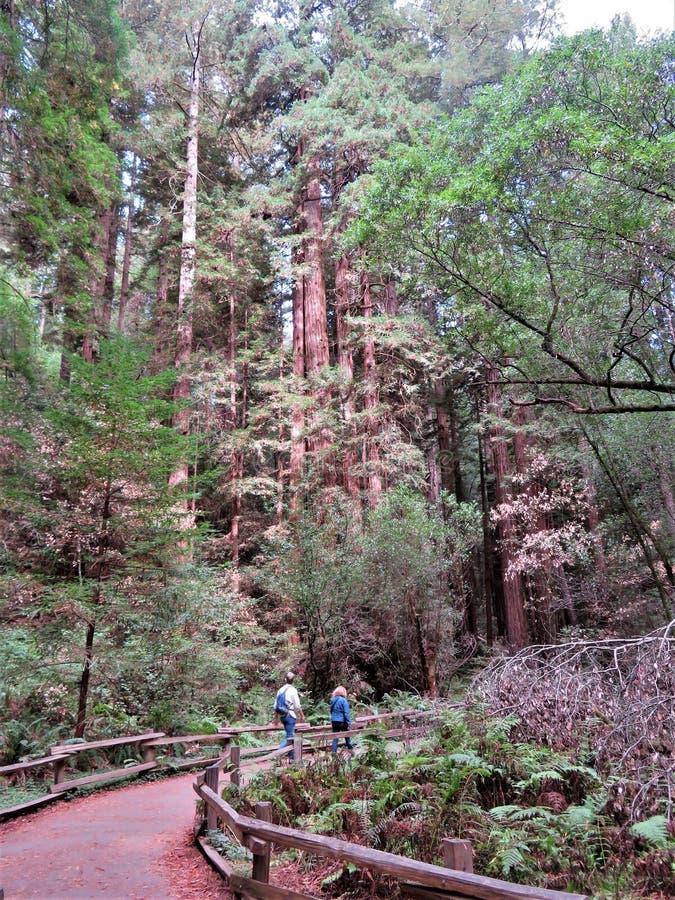 Muir Woods National Monument - 9/18/2017 - promenade de touristes par les arbres géants de séquoia à l'outsid de Muir Woods Natio photo stock