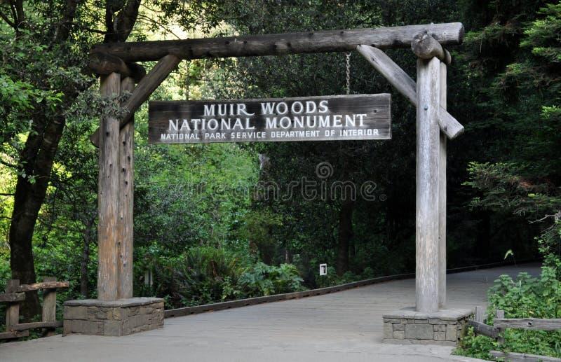 Muir Woods National Monumnet photos libres de droits