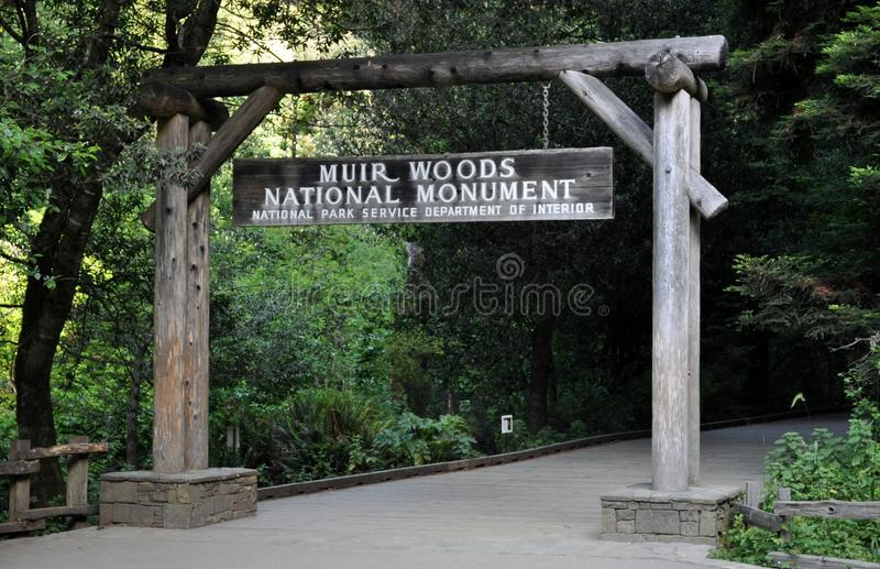 Muir Woods National Monumnet fotos de archivo libres de regalías