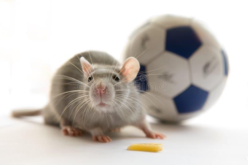 Muis en bal stock afbeeldingen