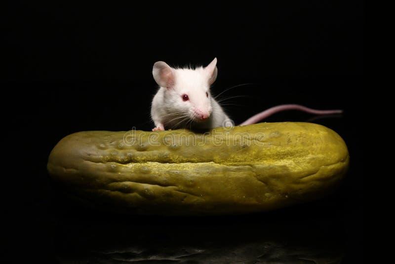 Muis en groenten in het zuur royalty-vrije stock fotografie