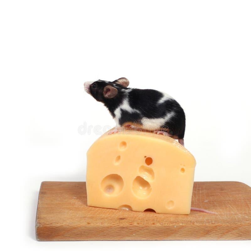 Muis en kaas royalty-vrije stock afbeeldingen