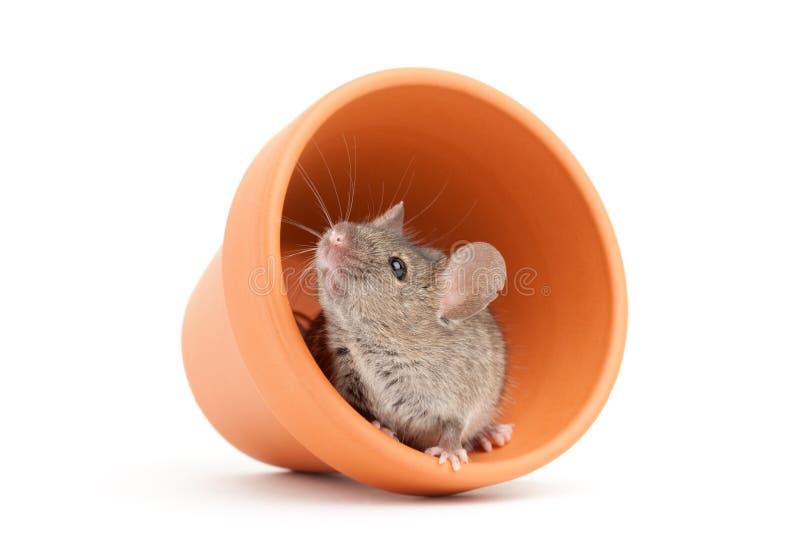 Muis en pot die op wit wordt geïsoleerdc royalty-vrije stock fotografie