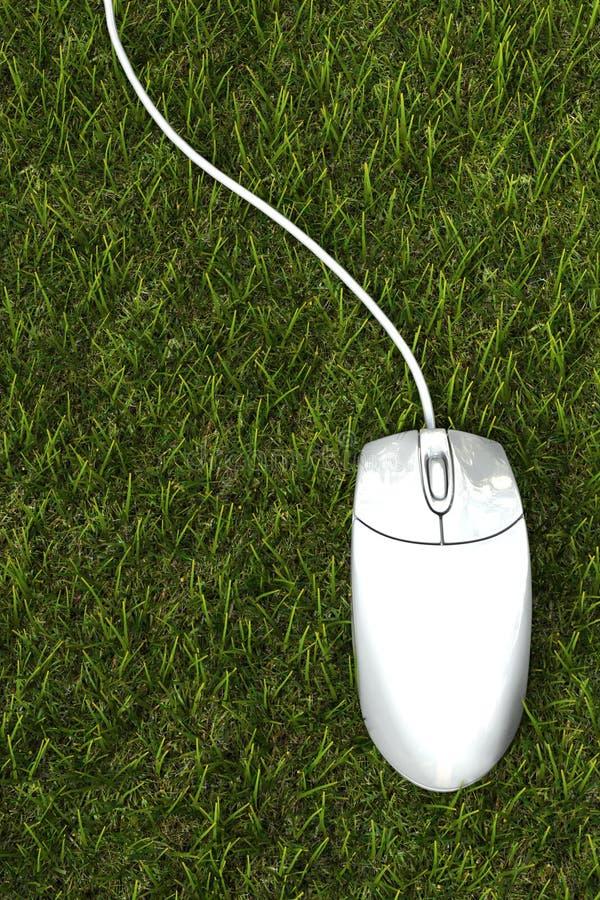 Muis op het gras stock fotografie