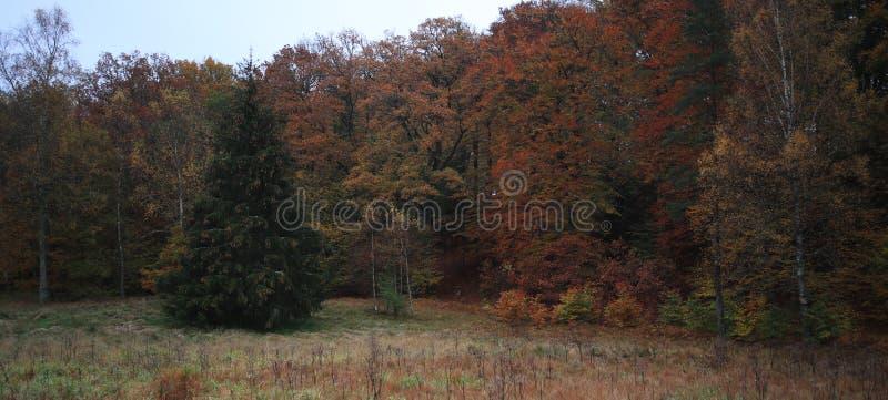 Muita cor nas madeiras quando o outono vier, fotos de stock