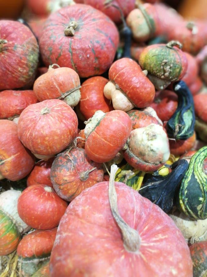 Muitas abóboras em um mercado dos fazendeiros foto de stock
