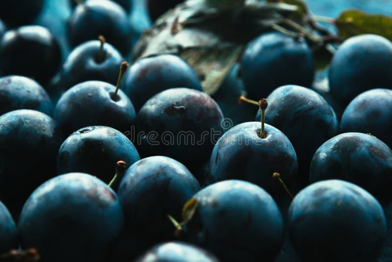 Muitas ameixas frescas no fim azul do fundo acima foto de stock