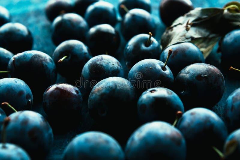 Muitas ameixas frescas no fim azul do fundo acima foto de stock royalty free