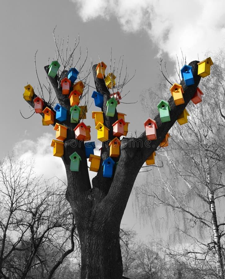 Muitas caixas coloridas do estorninho em uma árvore fotos de stock