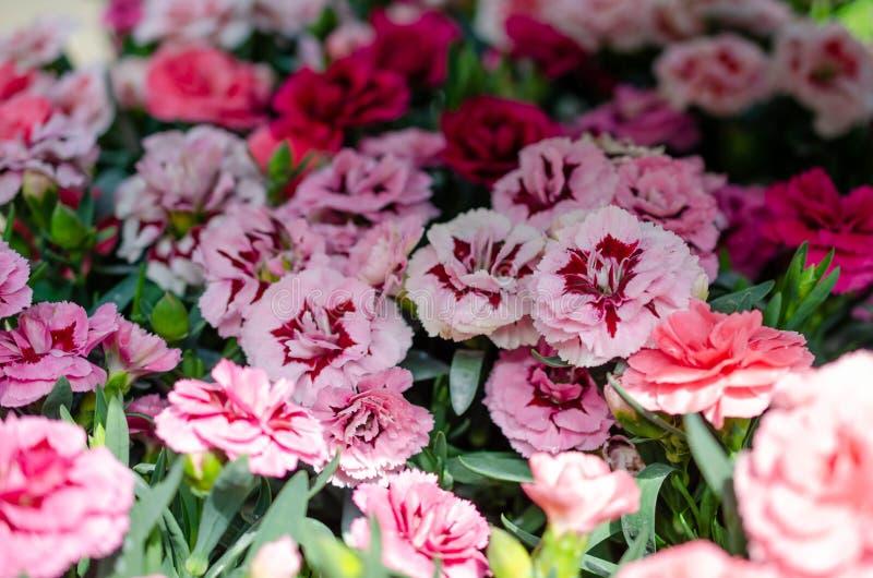 Muitas cores diferentes das flores no ver?o imagens de stock