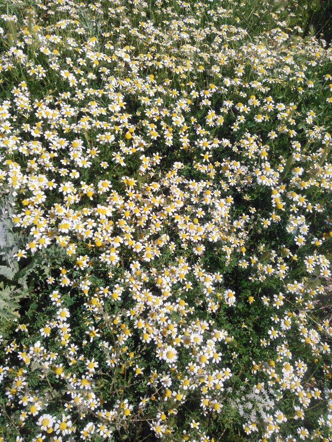 Muitas flores imagens de stock royalty free