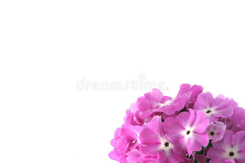 Muitas flores cor-de-rosa bonitas imagem de stock royalty free