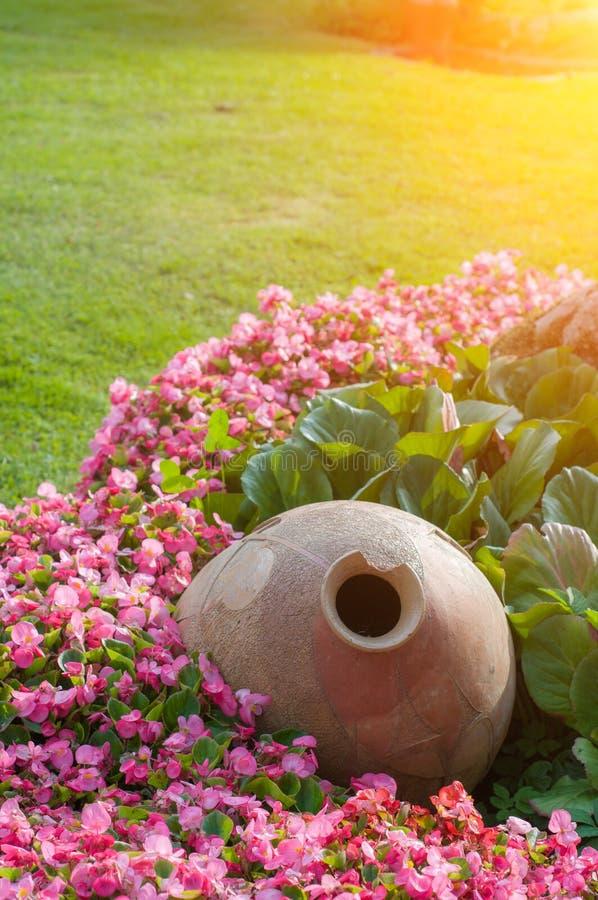 Muitas flores cor-de-rosa brilhantes do surfium fotos de stock