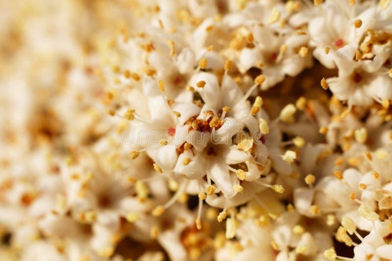 Muitas flores da cereja no quadro completo fotografia de stock
