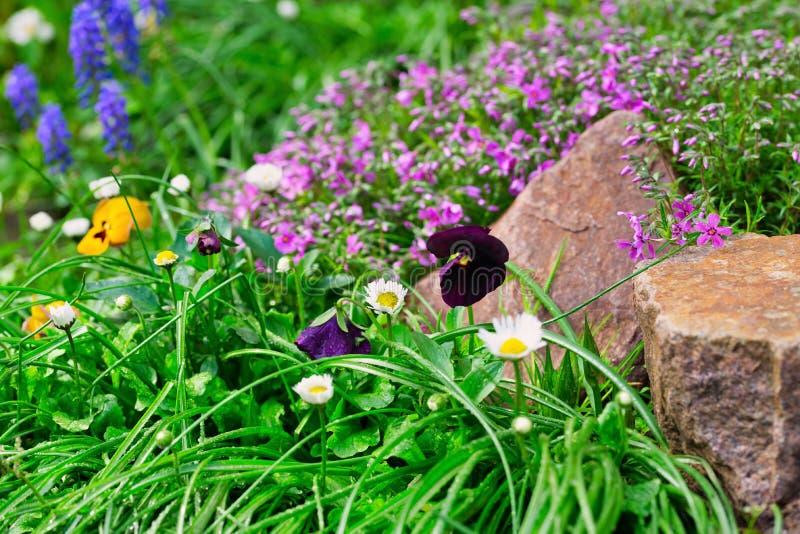 Muitas flores diferentes entre os pedregulhos das pedras fotografia de stock royalty free