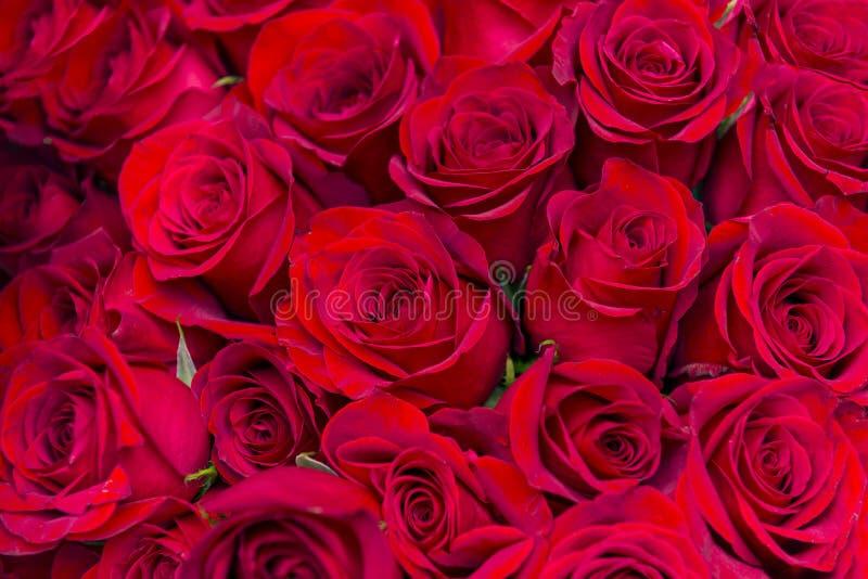 Muitas flores, um ramalhete de rosas vermelhas, pétalas vermelhas, flores em botão imagens de stock royalty free